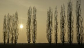 Inter_Poplars_LIz Farrow